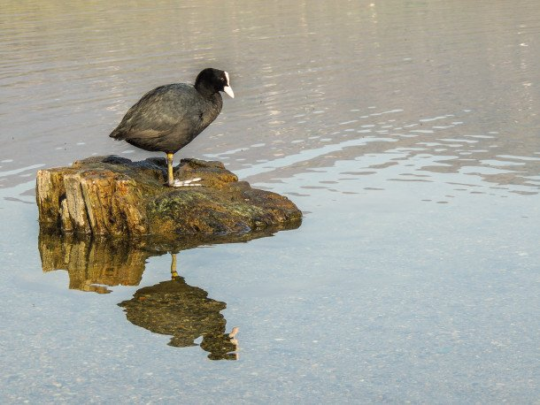 DUMA C'ANDUMA @Parco Naturale dei Laghi di Avigliana