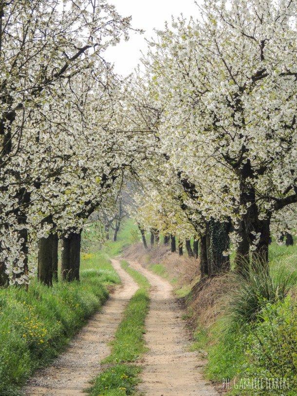 DUMA C'ANDUMA @La collina dei ciliegi