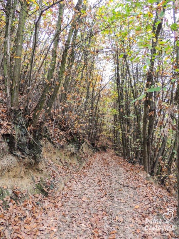Il Sentiero del Torion (Roero)