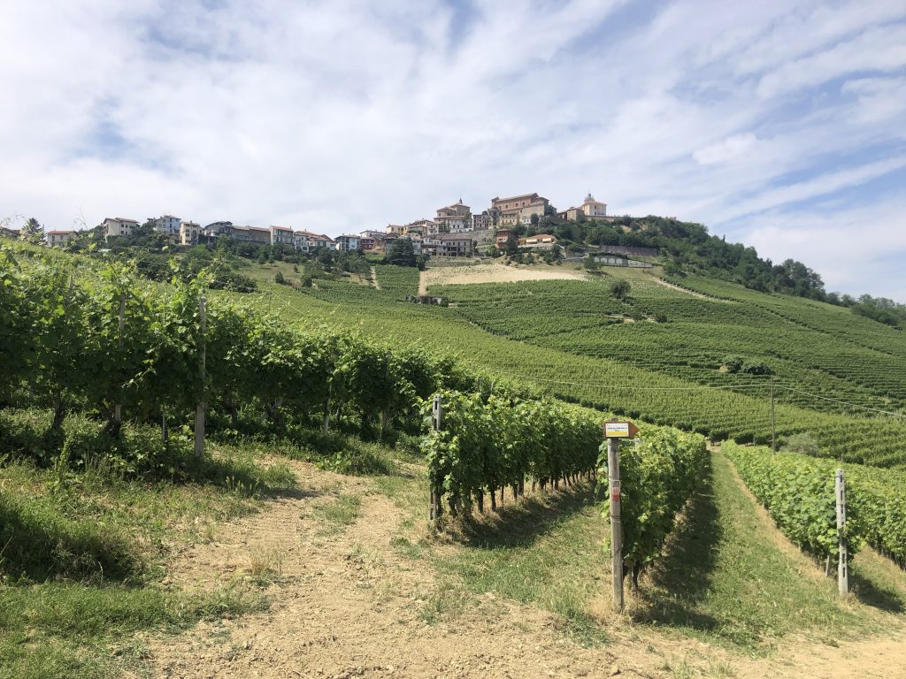 Hiking Tours in Piedmont Langhe Roero (ITALY)