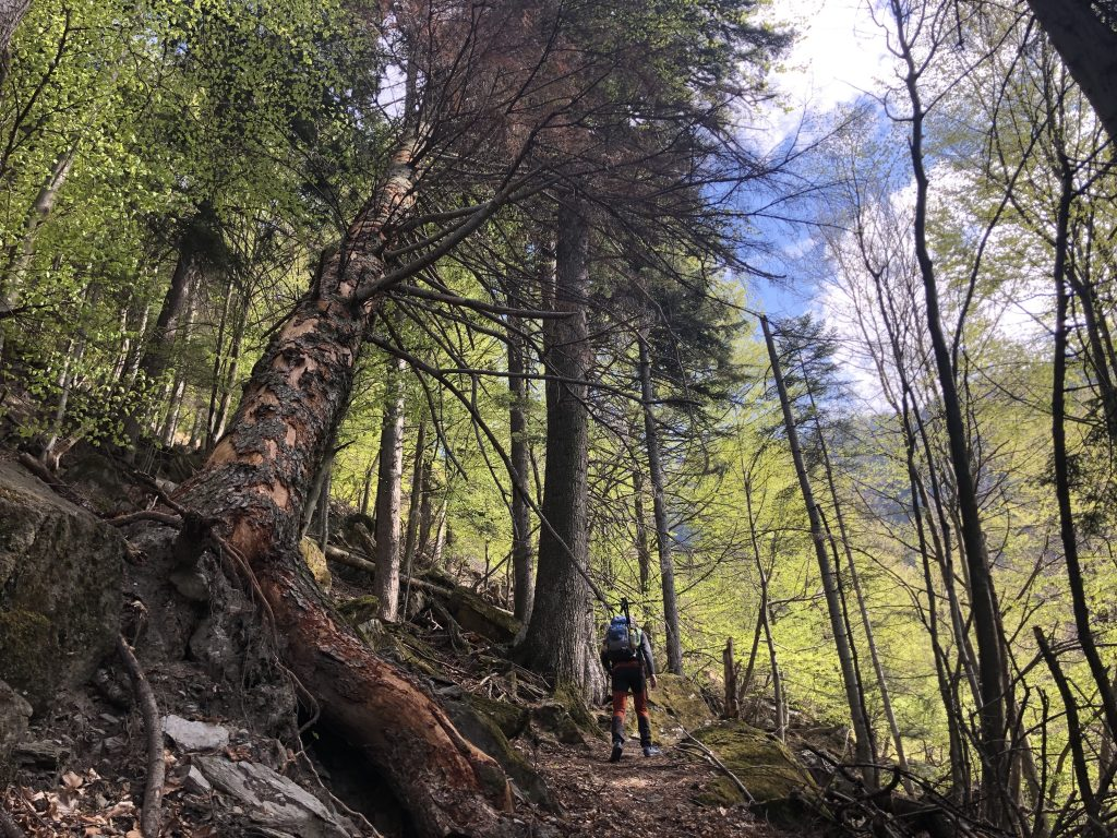 Hiking Tours in Piedmont (ITALY)