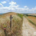 La Via Francigena da Lucca a Siena