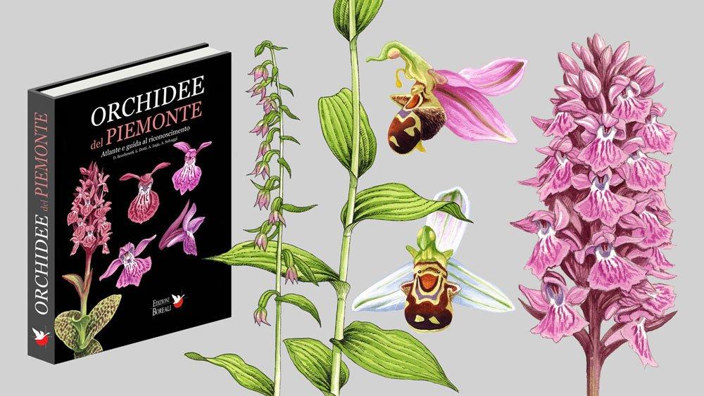 Orchidee del Piemonte
