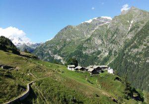 Alpenzù