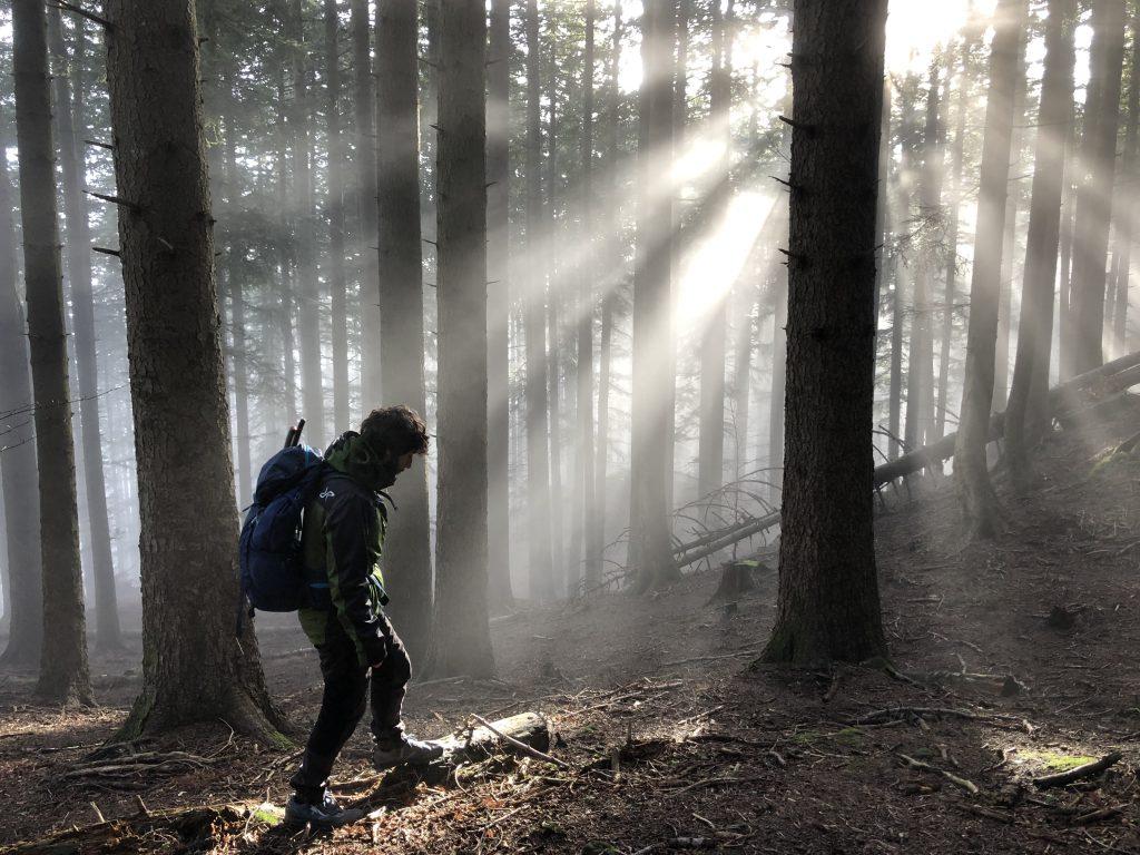 La luce filtra nell'abetina delle Foreste Casentinesi