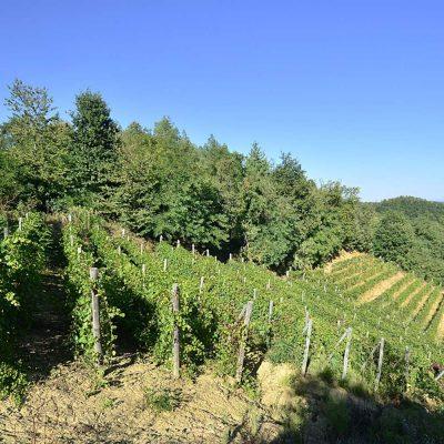 Escursione in Val Sarmassa