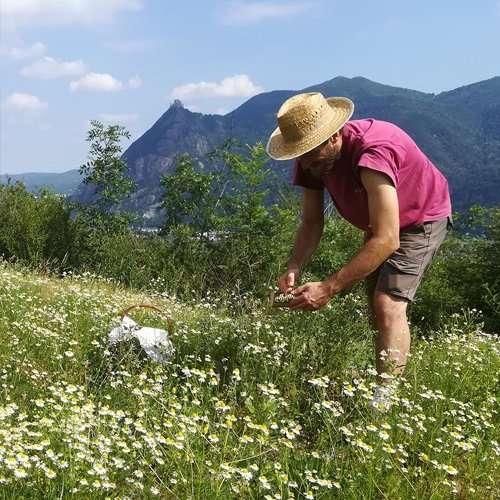 La Calcina Erbe di Montagna