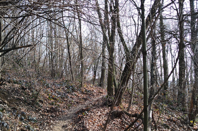 Escursioni sulla Collina di Torino con Duma c'anduma