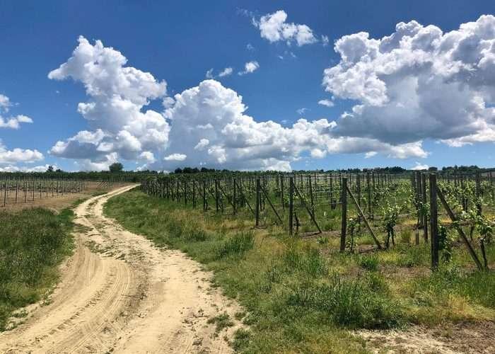 Escursione nel Roero in Piemonte