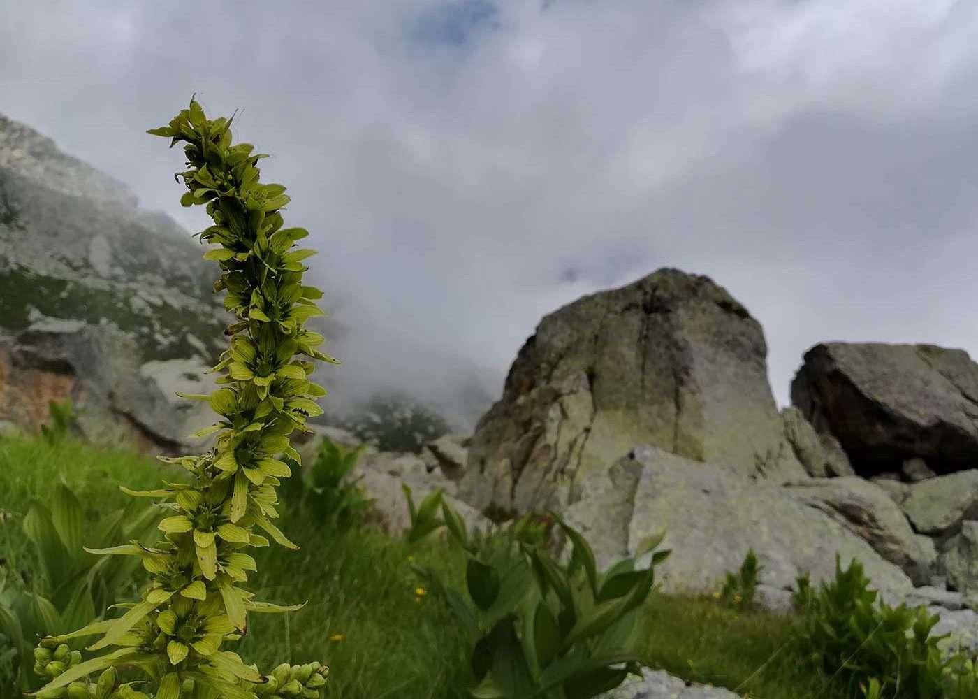 Escursione al lago Umbrias nel Parco del Gran Paradiso