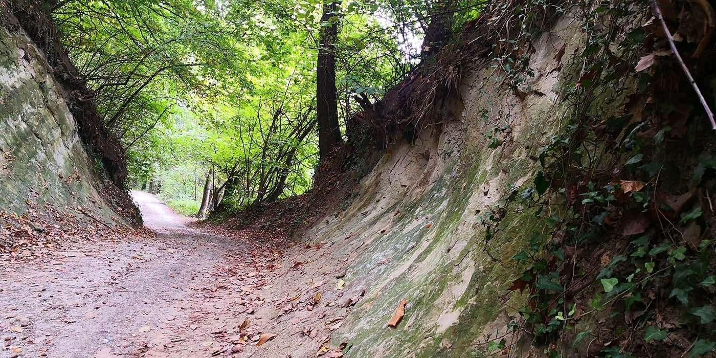 escursione-vaj-castagneto