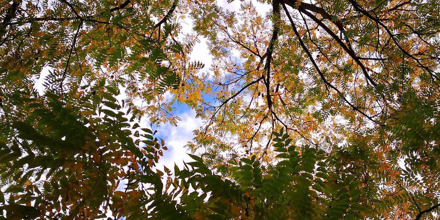 tour-torino-autunno