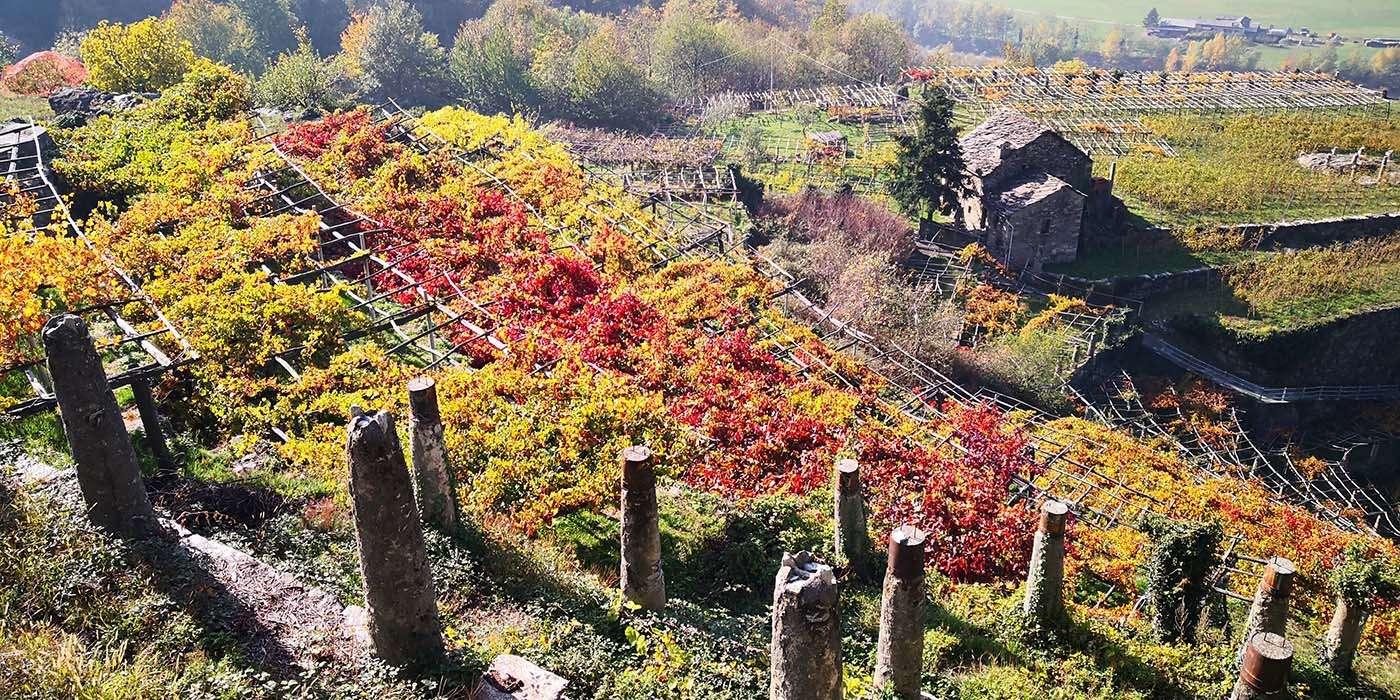 escursione-vitigni-eroici-carema